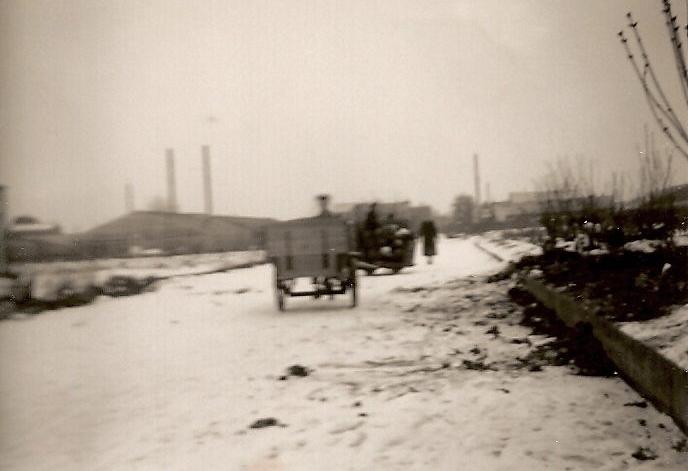 Mediaverdi-seringen-sneeuwballen-historie-aalsmeer